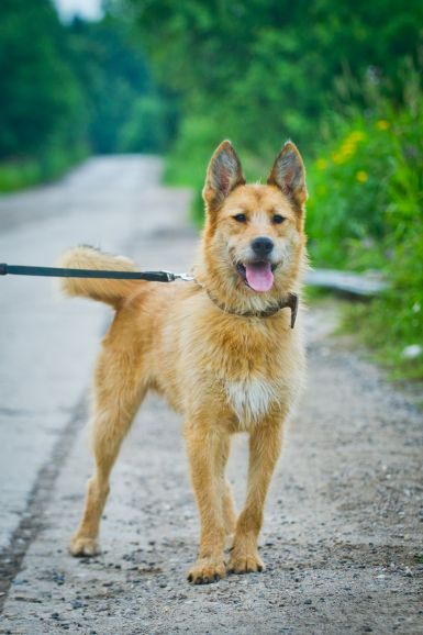 Молодой пёс Тоби ищет дом