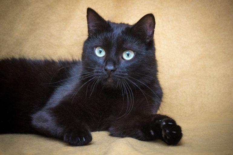 Подарите Нафанечке свою любовь! Котик в добрые руки!