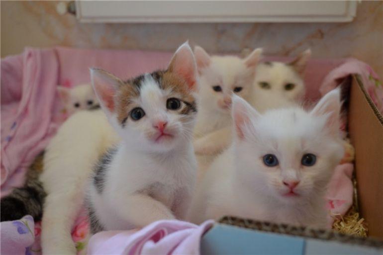 Четыре пушистых котёнка 2,5 мес. в добрые руки.