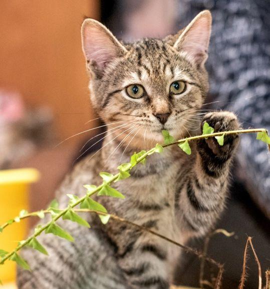 Очаровательный котенок — тигренок Лука ищет семью.