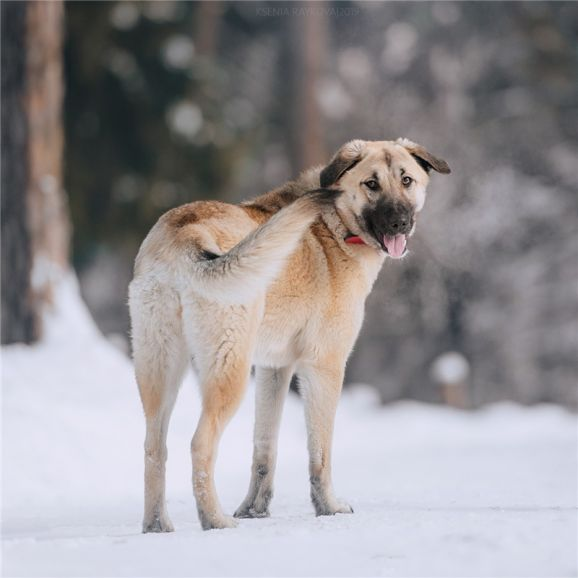 Собака Арья в дар