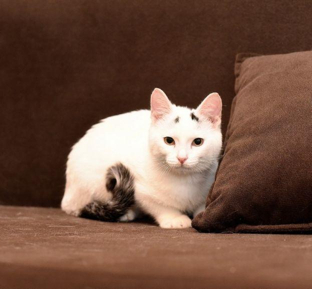 Котенок Лаки в добрые руки