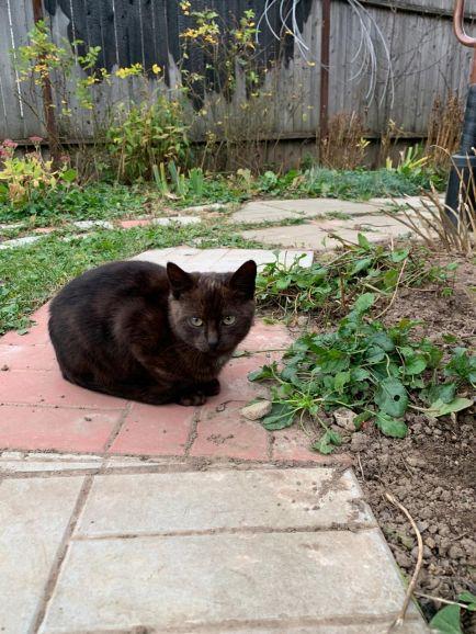Срочно нужен дом котику Гаврошу