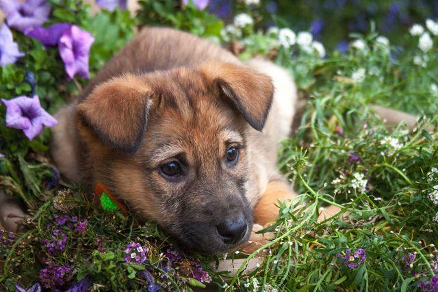 Ласковый и игривый 2 мес щенок Мич в добрые руки