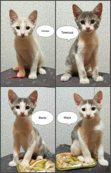 Очаровательные котята в дар, добрые руки!
