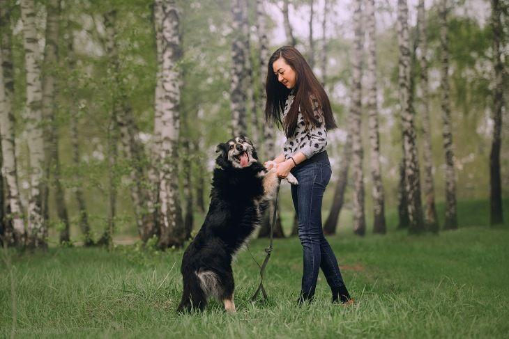 """Дакота - веселая и жизнерадостная собачка """"меховушка"""" из приюта."""