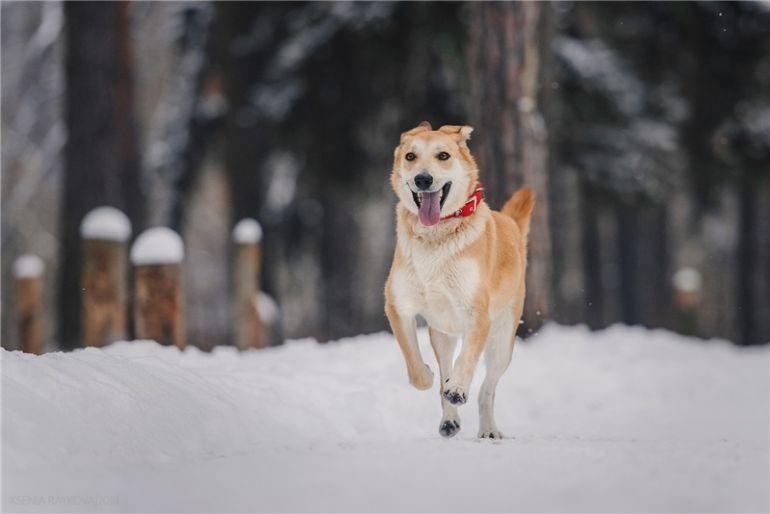 Изящная, красивая собака Айрис в добрые руки!