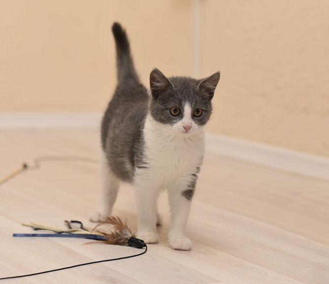 Котята Маркиз и Молли ищут дом