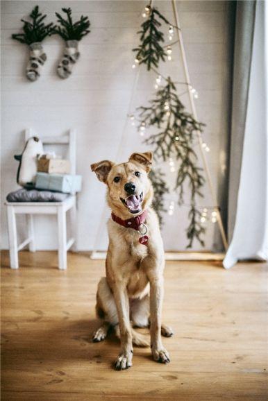 Чудесная собака Ева в добрые руки.
