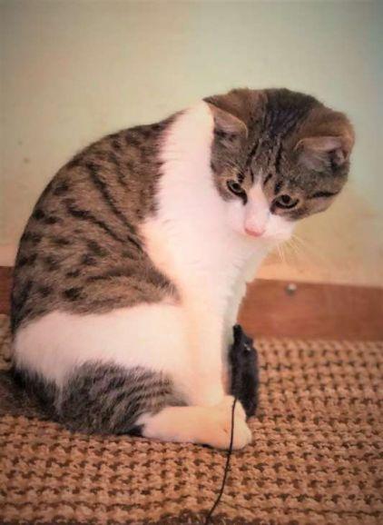 Милый котёнок Сёма ищет дом