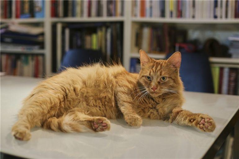 Огненная кошка-счастье в вашем доме