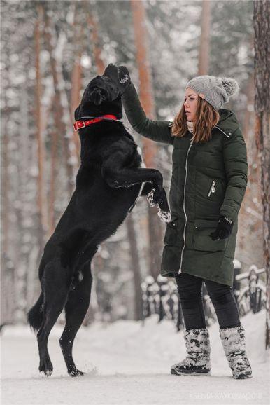 Крупный пёс Дамир в добрые руки