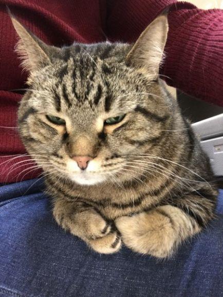 Предлагаем кота для души и для дома!