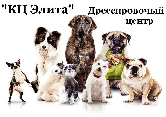 """КЦ """"Элита"""", передержка собаки с дресировкой"""