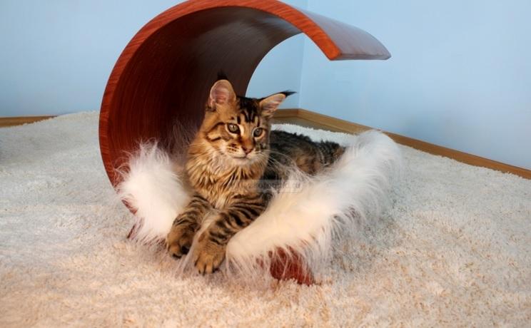 Домики для кошек и собак деревянные
