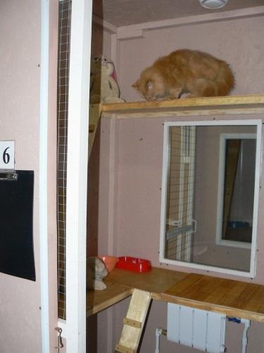 Специализированная гостиница для кошек
