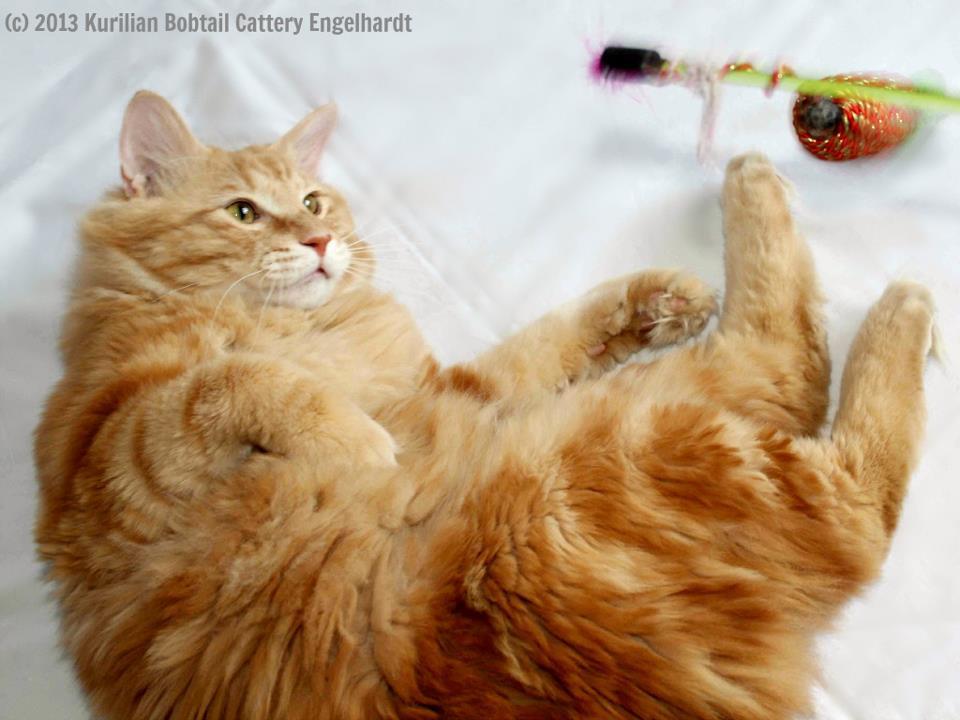 Титулованный котик приглашает на вязку
