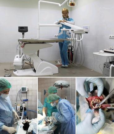 """Стоматологическое отделение в сети ветеринарных клиник """"Близнецы"""""""