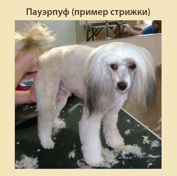 Стрижка кошек и собак от 900 рублей
