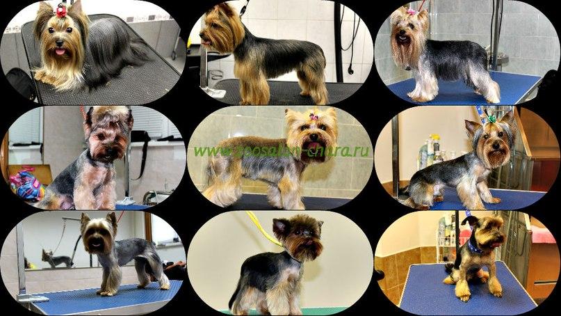 Стрижка собак и кошек, опытные грумеры