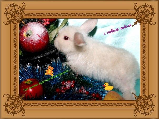 Продажа крольчат карликовых пород