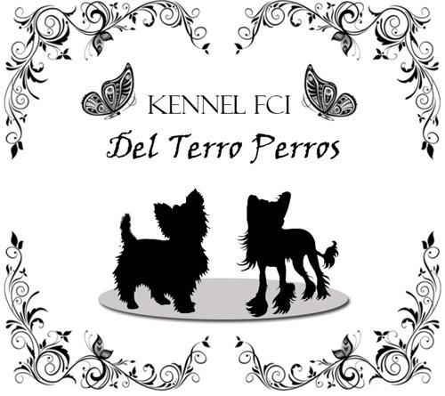 """Питомник """"Del Terro Perros"""" - китайская хохлатая, биро, бивер и шоколадный йорк"""