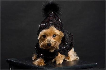 Одежда для собак от Urban Dogs
