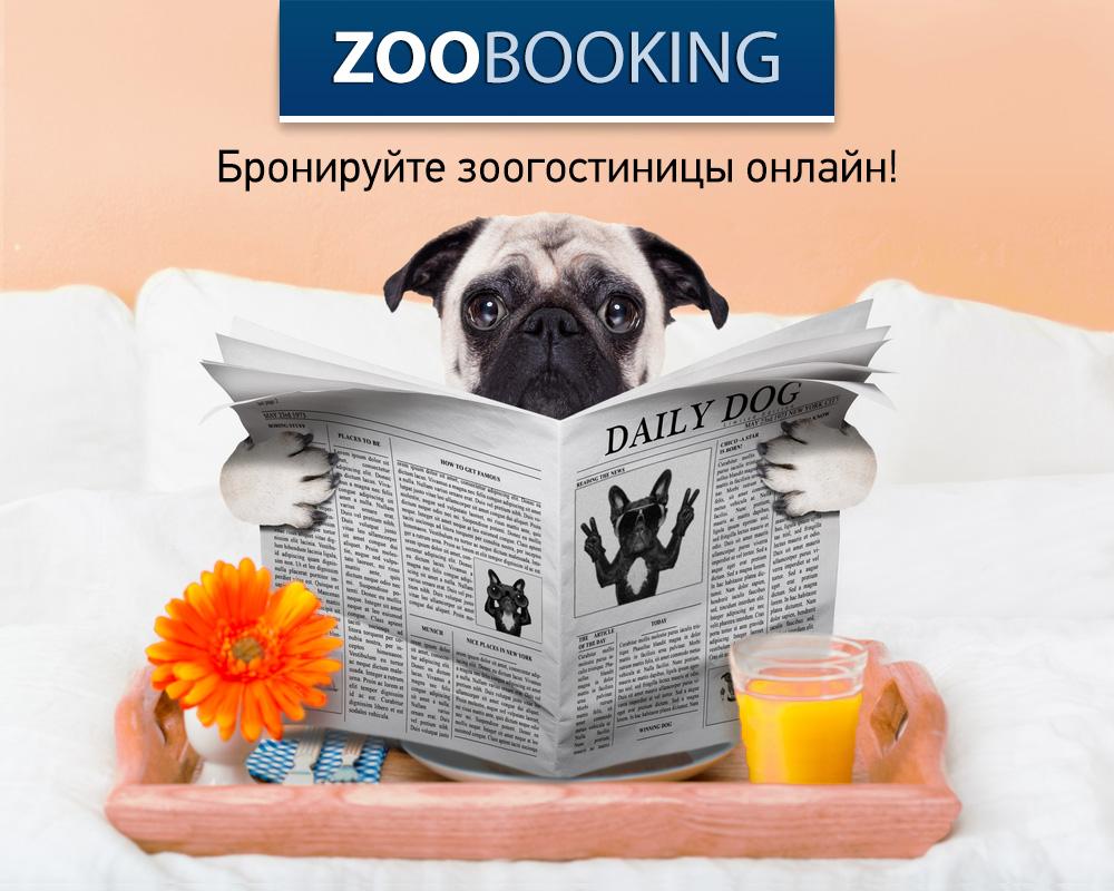 Зоогостиницы и передержки для вашего питомца