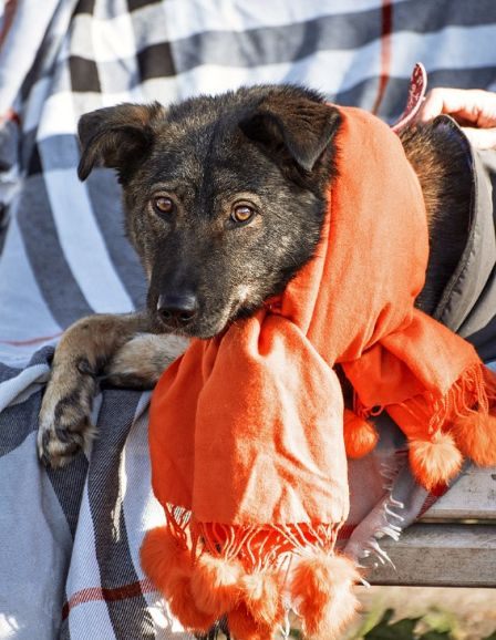 Молодая собака Лада в дар, в добрые руки