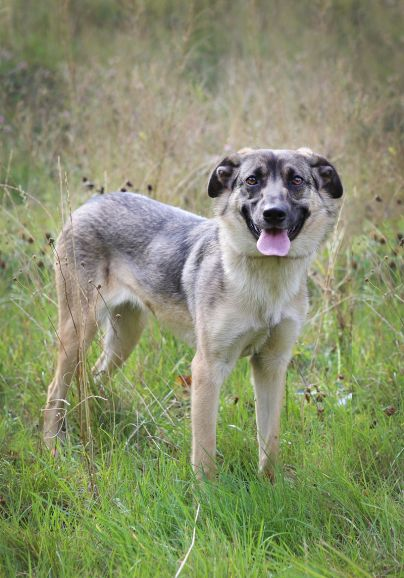 Невероятно ласковая собачка Дюся ищет дом, в дар