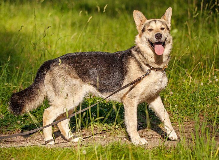 Замечательная собачка Лотта в добрые руки