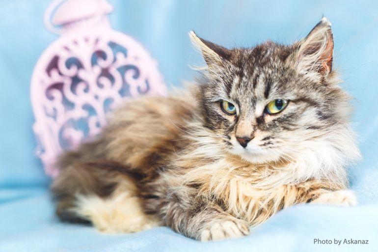 Уютный котёнок Фасолька ищет дом