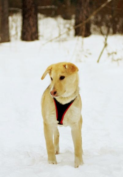 Необыкновенно милая собака Кэри в добрые руки
