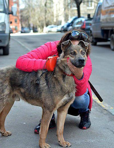 Молодой пёс Бублик в дар, в добрые руки