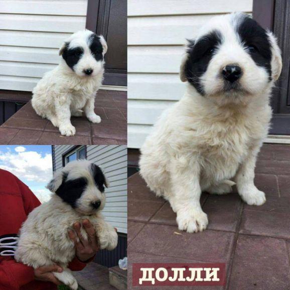 Весёлые хвостики - 1,5 месяца, щенки в добрые руки