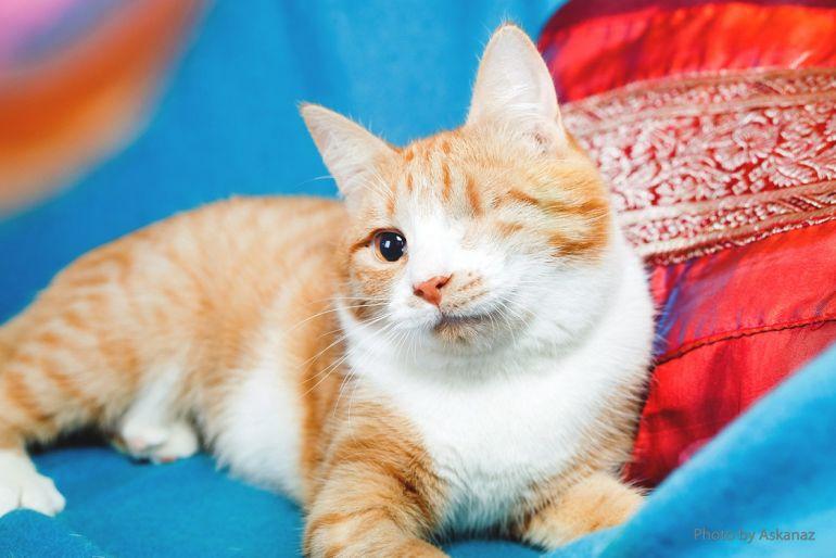 Княжна юная кошка с одним глазиком в поисках счастья