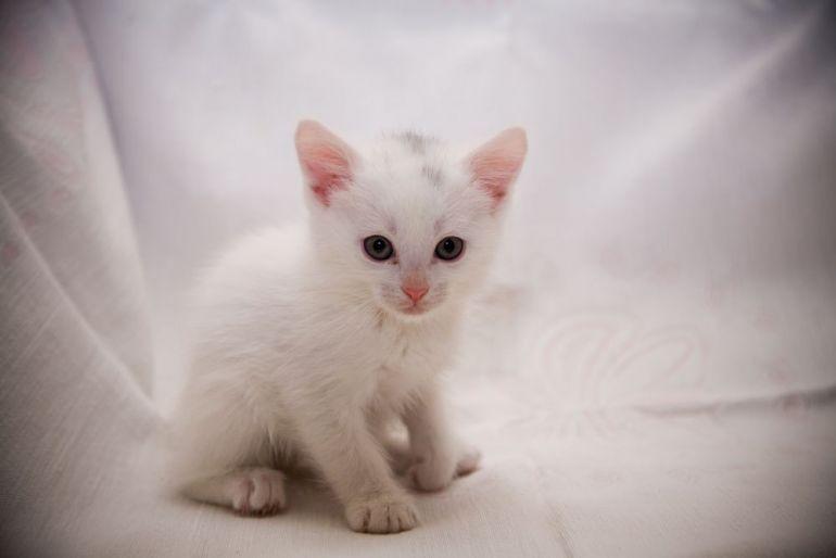 Котёнок Снежок в поисках дома