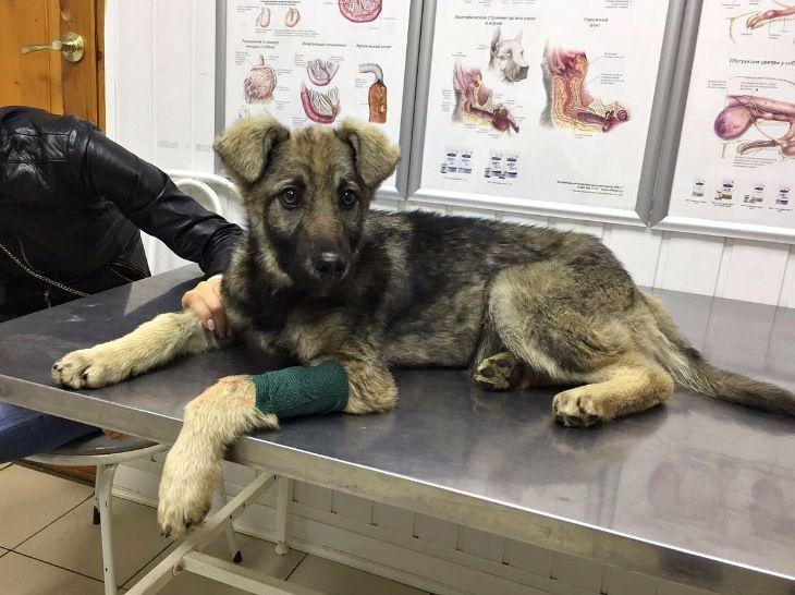 Очаровательный щенок в дар, в добрые руки