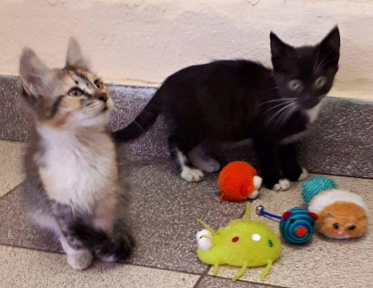 Котята мальчик и девочка в дар, в добрые руки