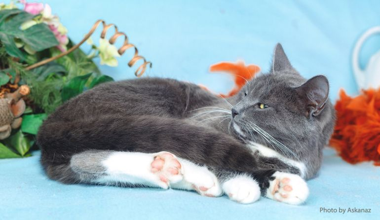 Мисс очарование и обаяние, кошка Яна ищет дом
