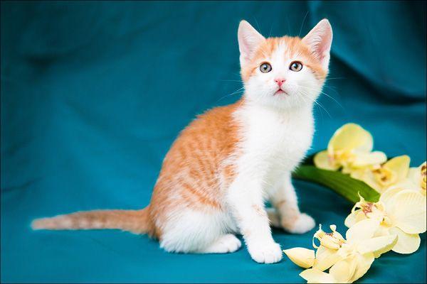 Афина и Василек - очень красивые котята в дар