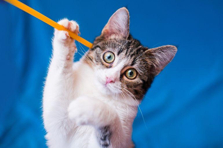 Крошка Фаня, самый очаровательный котёнок, в самые лучшие руки