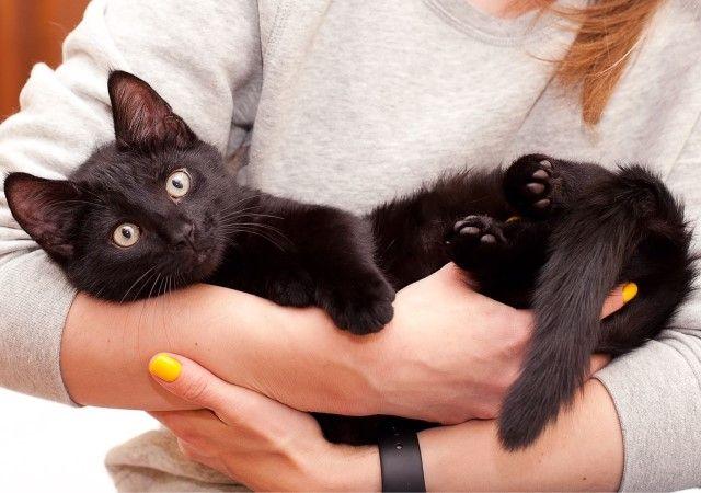 Чёрный красавчик Уголёк! Котёнок, 3 месяца