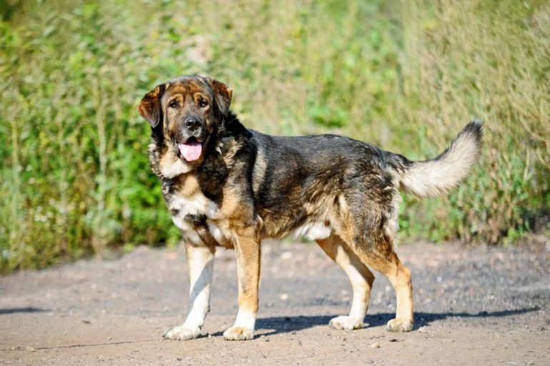 Шикарный пёс Буба ищет дом
