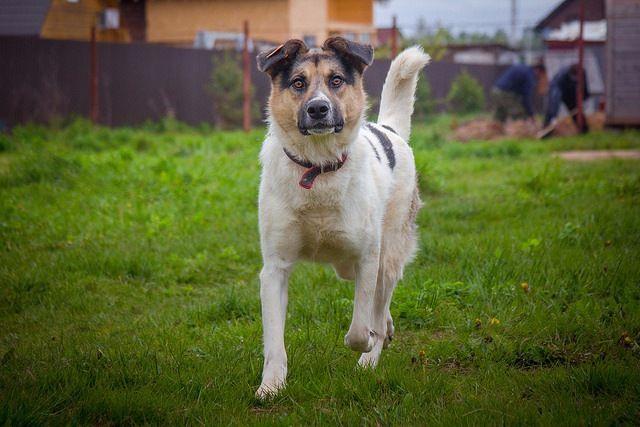 Чудесный пёс Чак в добрые руки