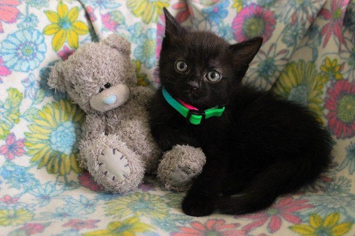 Маленькие котятки ищут дом, в дар