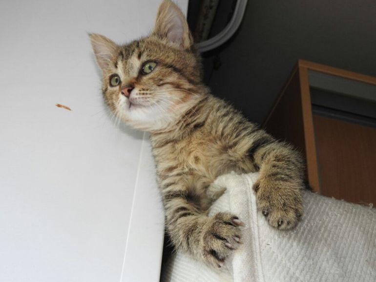 Котёнок Арни в добрые руки