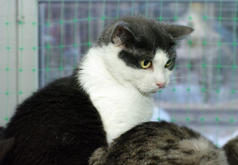 Оливия, кошка-аутист, тихая, робкая, нелюдимая. Ей трудно найти дом