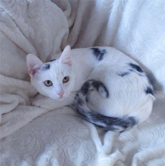 Котёнок-подросток Лёлик - ласковый красавчик