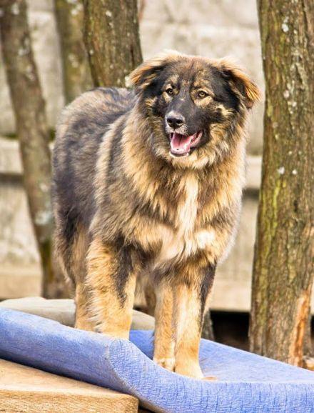 Особенная собака Феня ищет дом